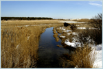 Click here to view a larger image of Cape Cod Beach Marsh