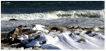 Click here to view a larger image of Winter Wave.